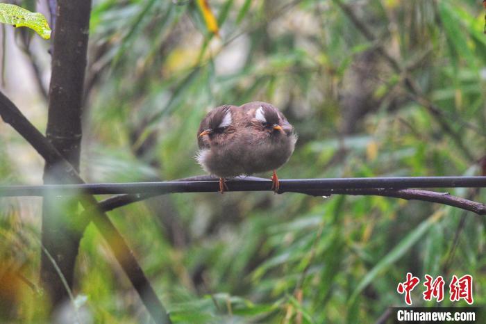 湖北神农架举办观鸟大赛已经开始,好看的鸟儿需要好的环境哦!