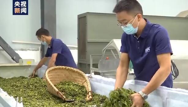秋收时节,武汉农产品市场行情看好