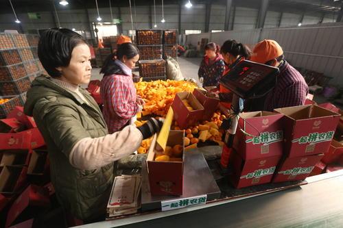 枝江市新周场村小村成了全国水果集散地