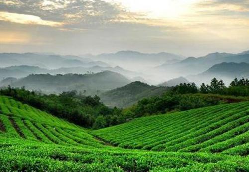 湖北英山云雾茶的特产推荐