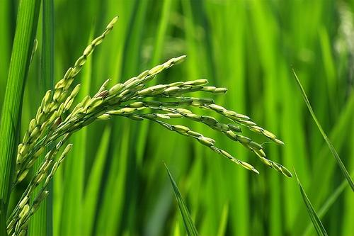 天门:市场缺啥,田里长啥,农业才有希望